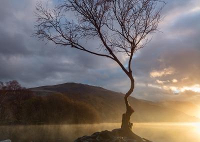 The lone tree at dawn on Llyn Padarn