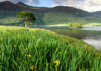 Summer at Crummock water in the lake District