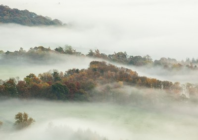 Misty woodland near Ullswater