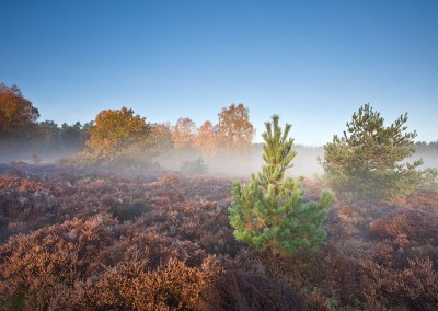 Thetford Forest on a misty Autumn morning