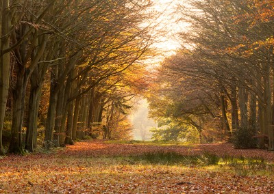 Autumn at Felbrigg in the Norfolk Countryside