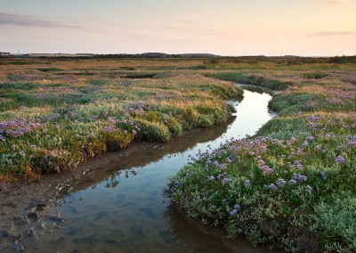 Salt marsh and sea lavender at Morston on the North Norfolk Coast