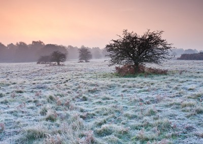 Sunrise over Brettenham Heath on a cold frosty morning on the edge of Thetford Forest, Norfolk