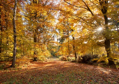 Autumn colour at Bacton Woods