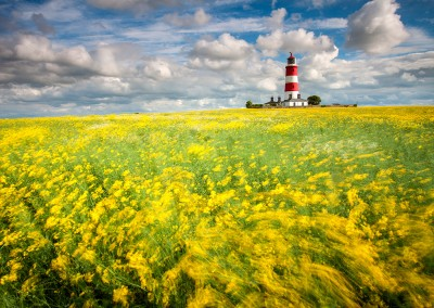 Happisburgh lighthouse in a field of oilseed rape