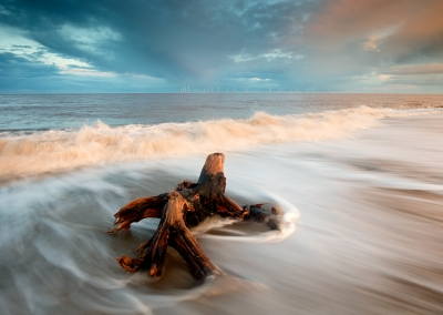 A tree root washed up on the beach at Caister on the Norfolk Coast