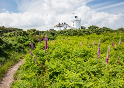 Comer Lighthouse & Foxgloves