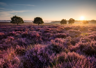 Roydon Common at sunrise in the Norfolk Countryside