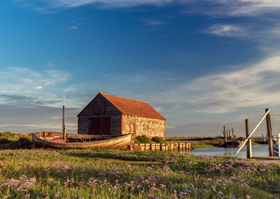 Thornham coal barn and sea lavender on the Norfolk Coast