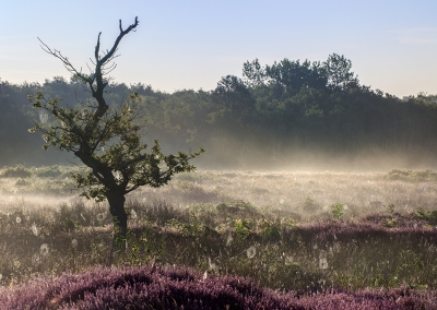 Roydon Common at sunrise in Norfolk