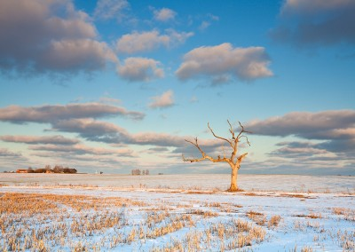 Winter conditions close to Oby in Norfolk