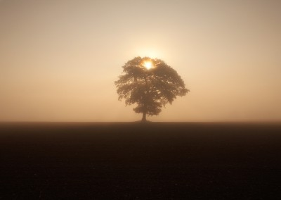 Silhouetted tree in the mist at sunrise, Norfolk Countryside