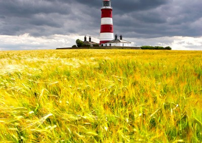 Happisburgh Lighthouse & Barley Field in the summer on the Norfolk Coast