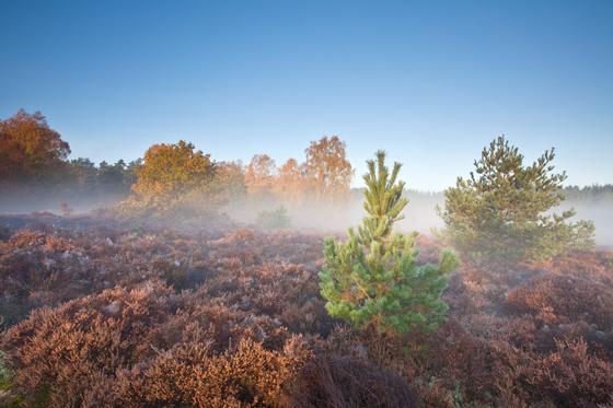 Thetford Mist
