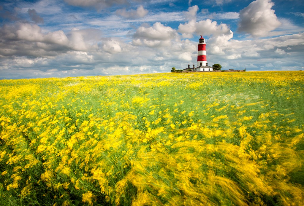 Happisburgh Lighthouse and a field of Oil Seed Rape