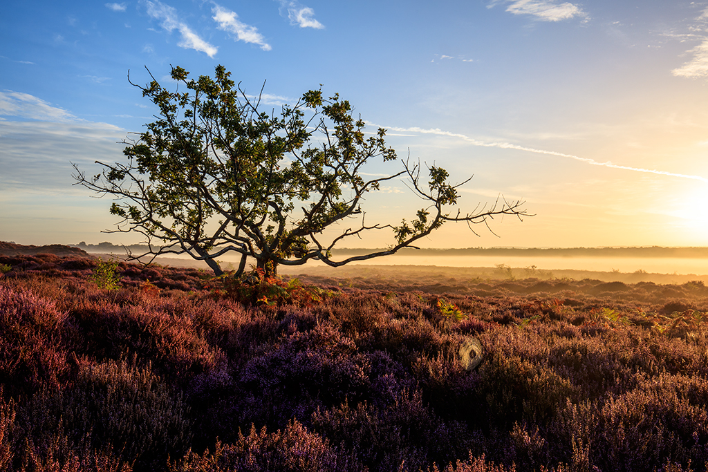 Roydon Common  in Norfolk